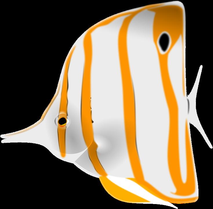 Fish, Sea Life, Animal, Stripes, White, Orange