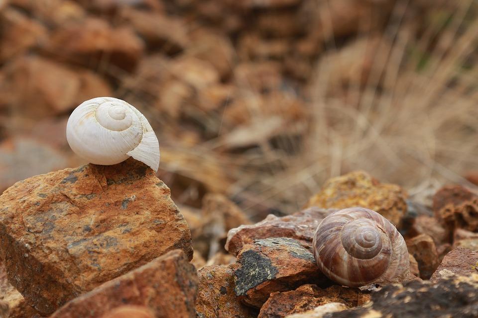 Shell, Snails, Stone, Brown, Yellow, Ot, White, Kennedy