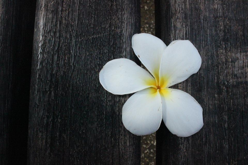 Flower, White Petals, White Flower, Floral, Natural