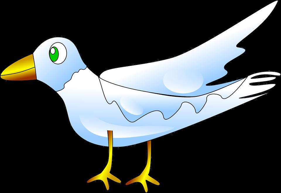 Bird, Animal, Fly, Nature, Dove, White, Pigeon