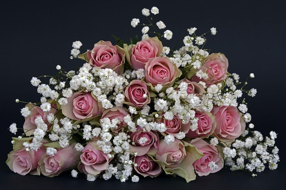 Roses, Rose Flower, Flowers, Pink, White, Gypsophila