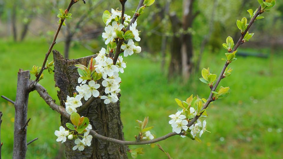 Nature, Plants, Twigs, Flourishing, White, Flowers
