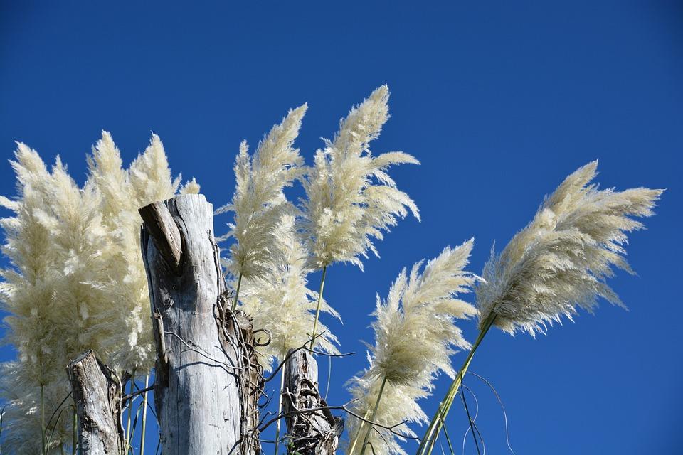 Sky, White, Blue, Reed