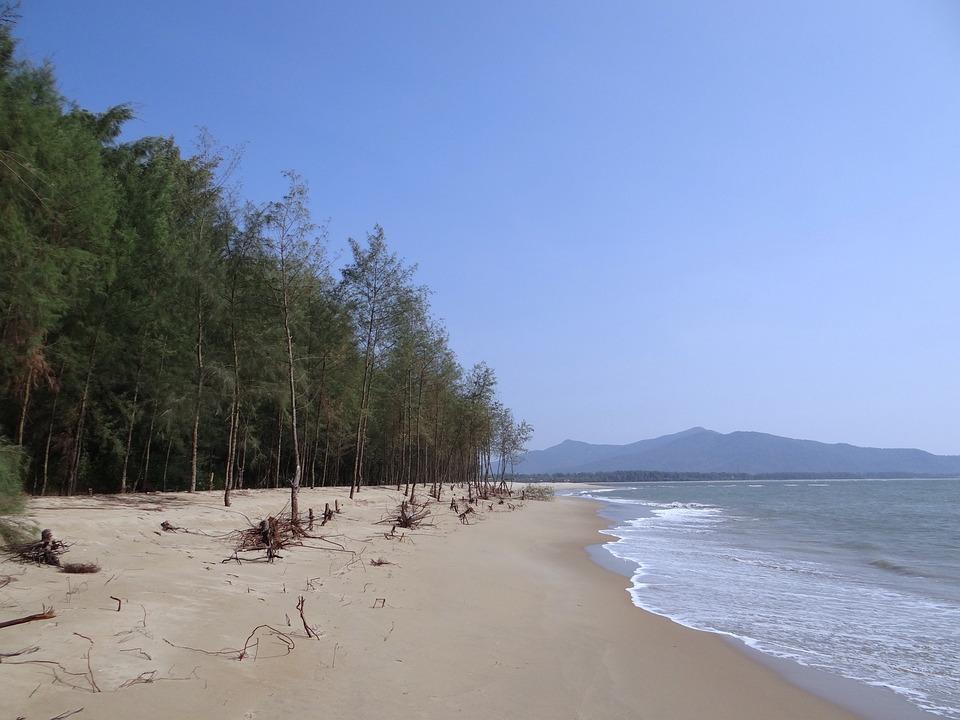 Beach, White Sand, Casuarina Forest, Arabian Sea