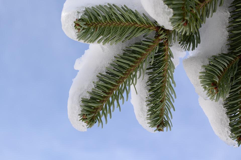 Snow, Tree, Fir, Sky, Frozen, White, Outdoors