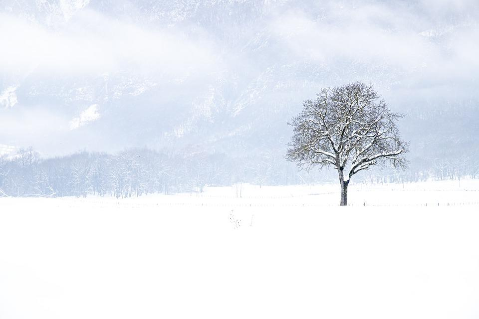 Snow, Winter, Tree, Landscape, Nature, White, Bare Tree
