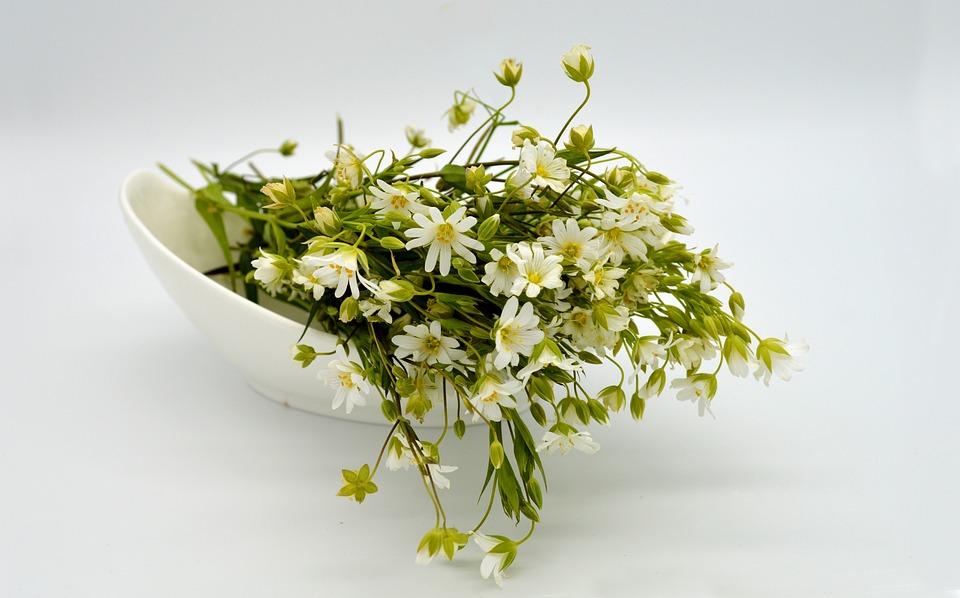 Stellaria Holostea, Flowers, White, Spring Blossoms