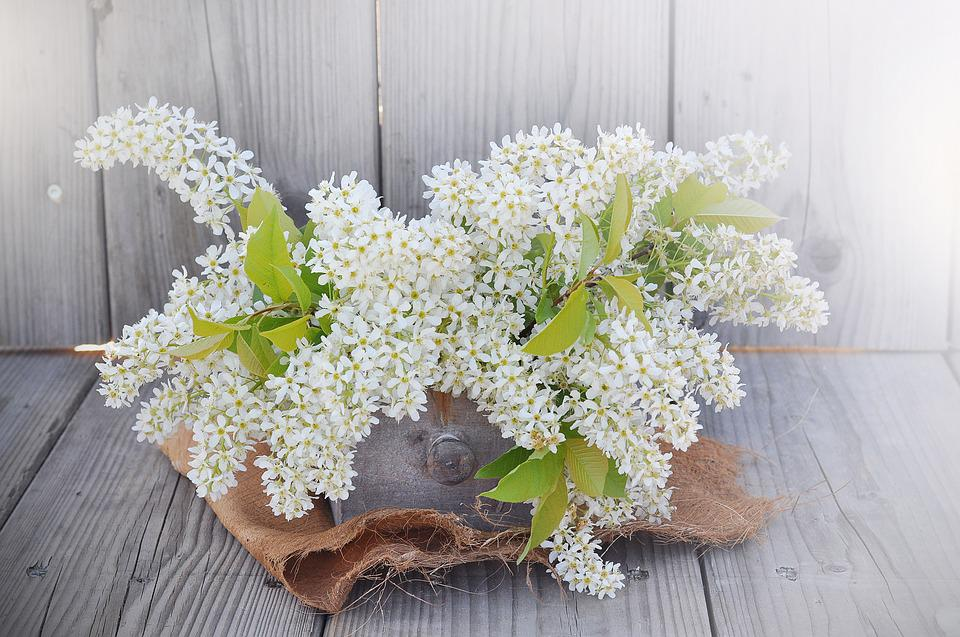 Lilac, Flowers, White, White Lilac, Branches, Spring