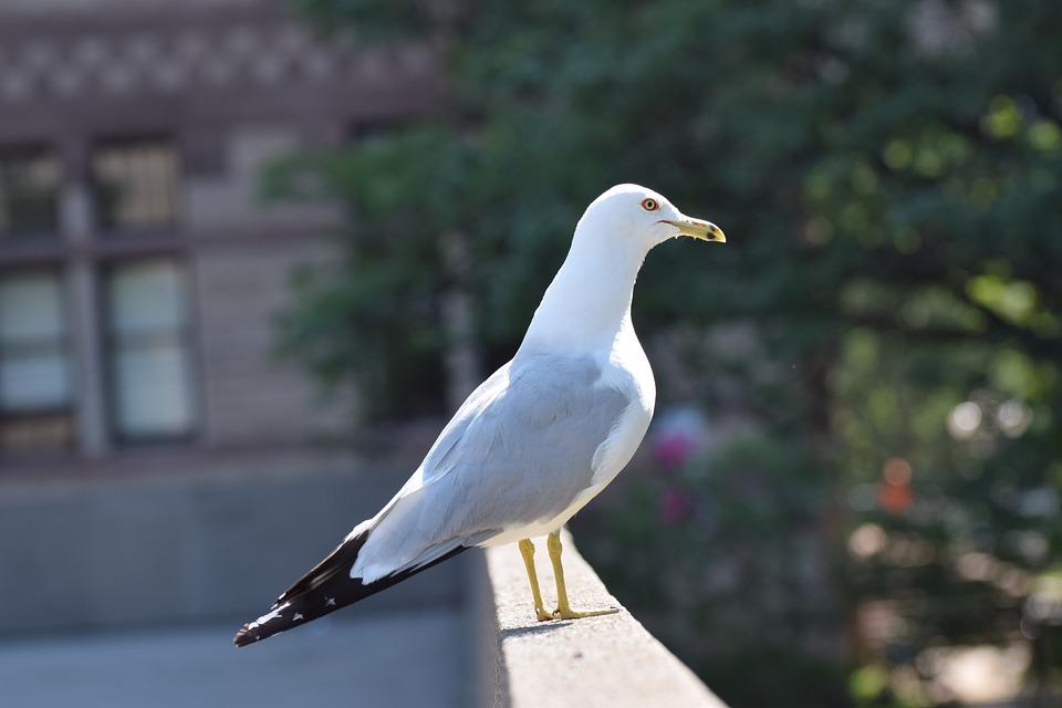 Seagull, Neck, Bird, Sunny, Animal, Gull, White, Fauna