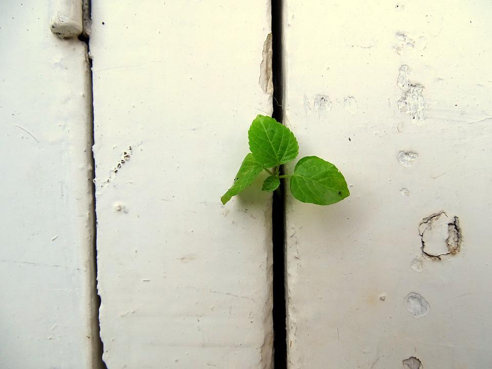 Plant, Wall, Green, White, Inside, White Wall, Leaf