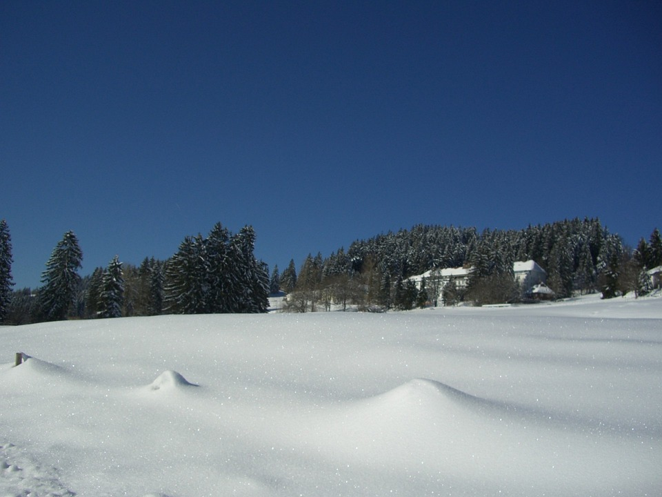 Winter, White, Blue, Snow, Sky, Firs, Health Clinic