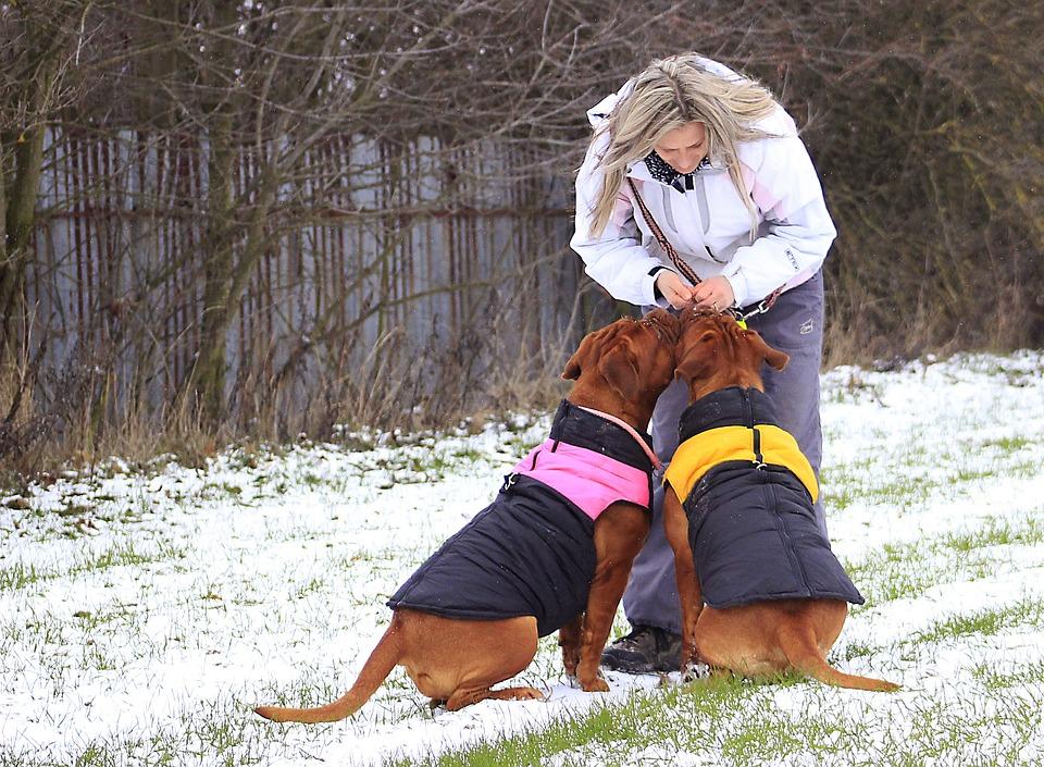 Snow, Dog, Bordeaux, Dogue, White, Mastiff, Winter