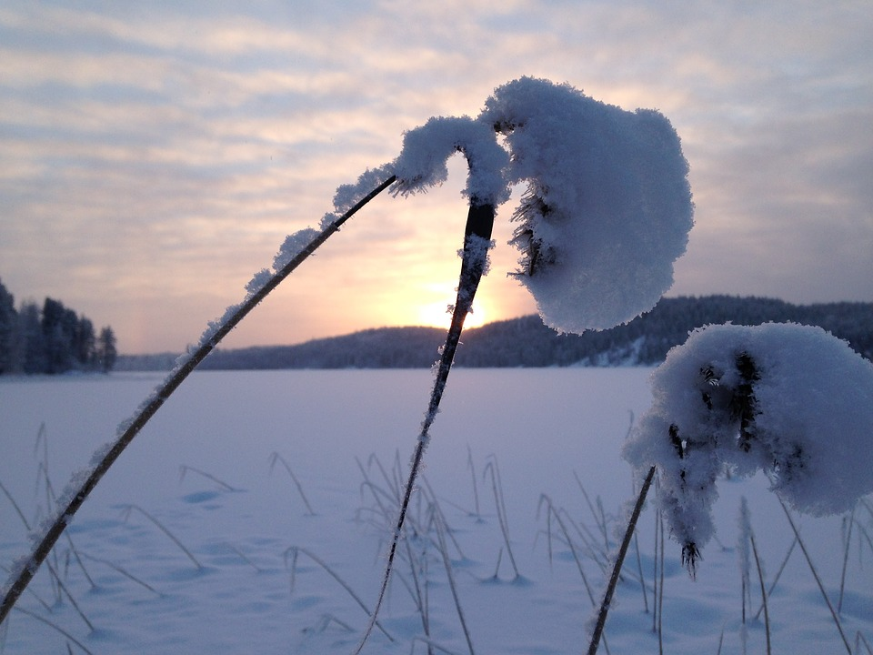 Frost, Snow, Winter, Sun, White, Crystal, Ice, Reed