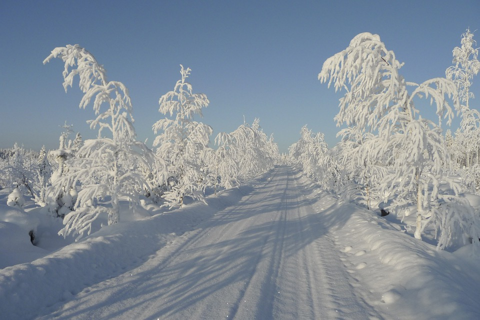 Winter, Sun, Cold, Tree, Frosty Tree, Snow, White, Road