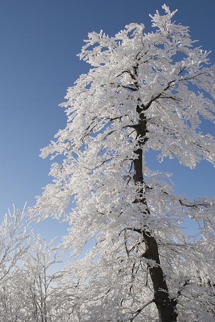 Tree, Winter, Snow, Nature, White, Snowy