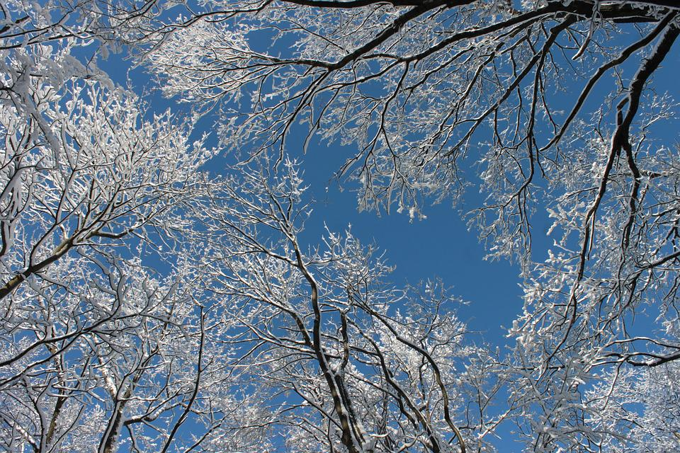 Snowy Branches, Winter, Trees, Snow, White, Wintery