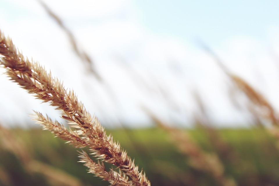 Field, Wide, Plant, Landscape, Nature, Sky, Clouds