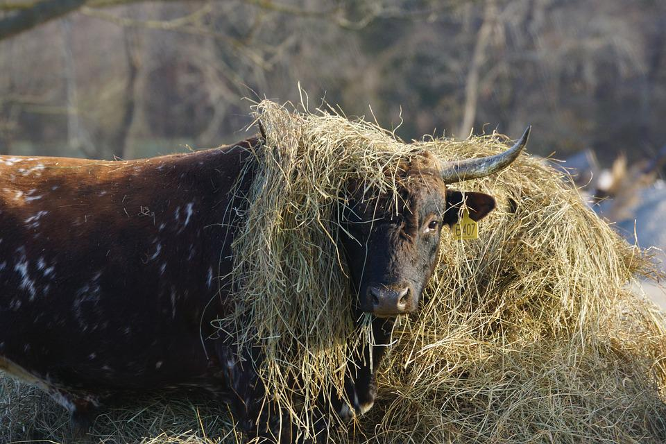 Animal, Nature, Mammal, Grass, Outdoors, Hay, Fun, Wig
