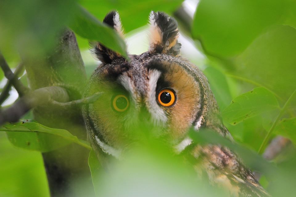 Animal World, Nature, Animal, Wild, Owl