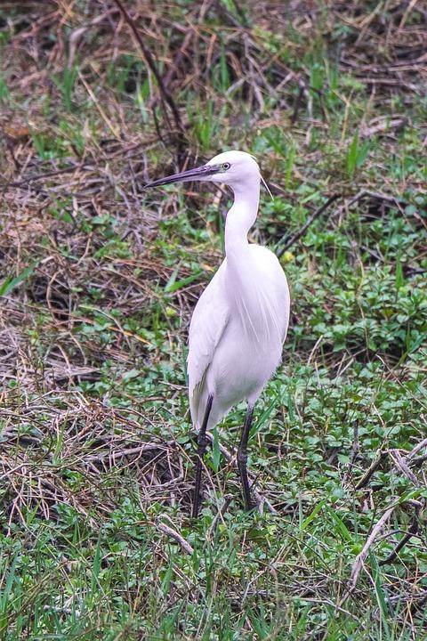 Nature, Wild Life, Birds, Animalia, Open Air, Wild
