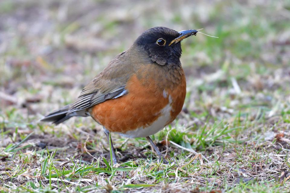Natural, Wild Animals, Bird, Outdoors, Access Kahala