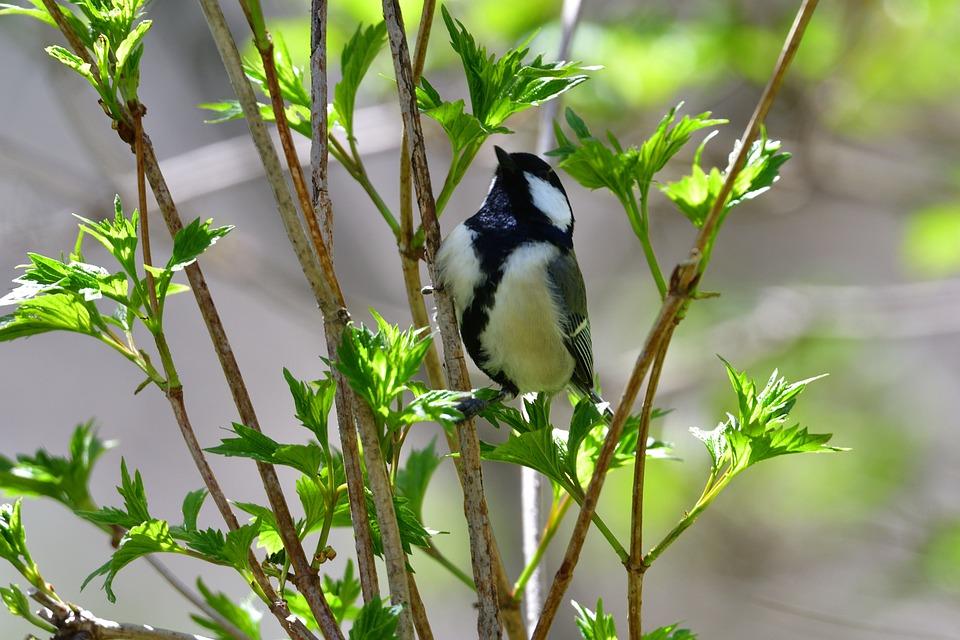 Natural, Outdoors, Leaf, Bird, Wild Animals, Tits