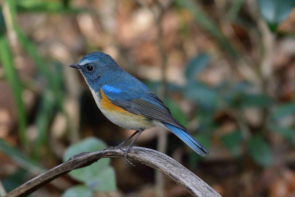 Wild Animals, Bird, Natural, Outdoors, Animal