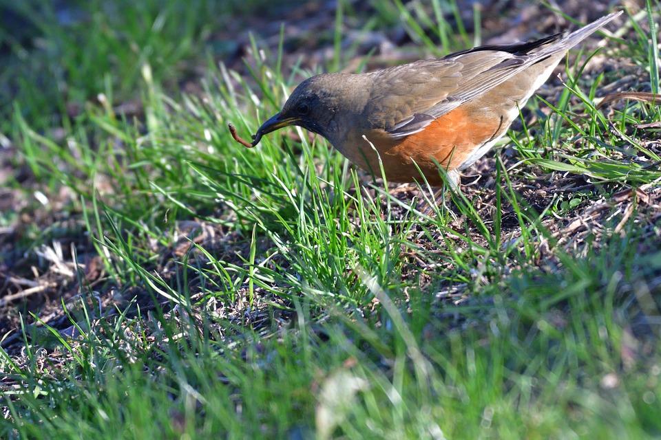 Natural, Grass, Bird, Wild Animals, Outdoors