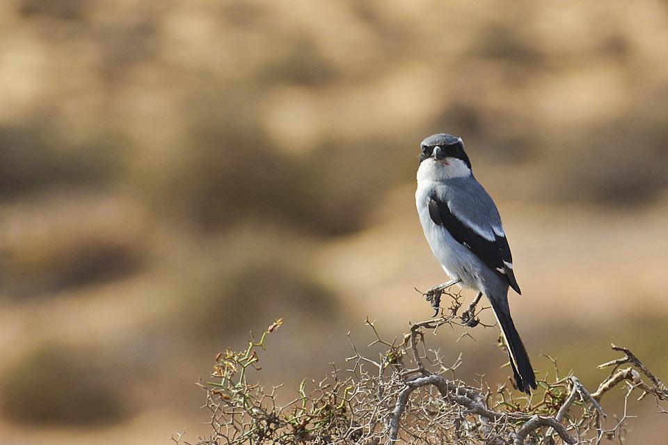 Bird, Bush, Wild, Birds, Animals, Beak