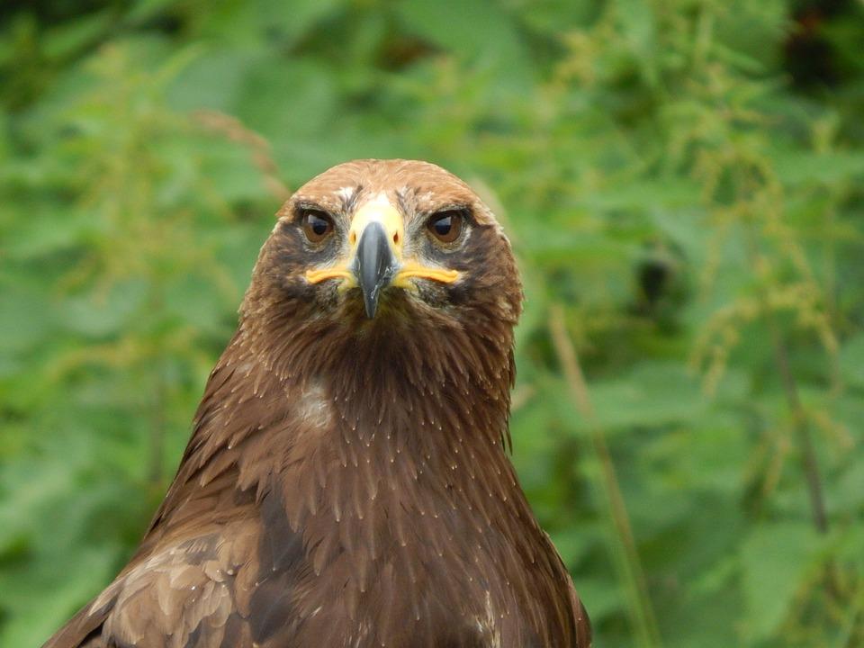 Nature, Animal World, Bird, Animal, Wild, Adler