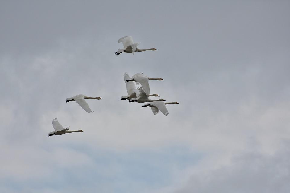 Animal, Sky, Cloud, Bird, Wild Birds, Waterfowl, Fields