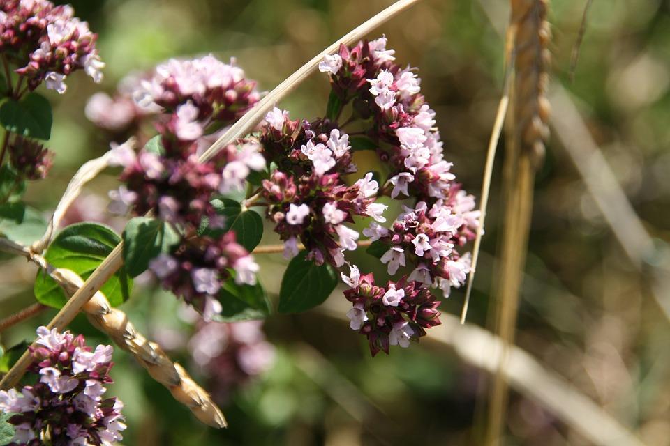 Flower, Nature, Plant, Leaf, Bush, Wild, Blossom, Bloom