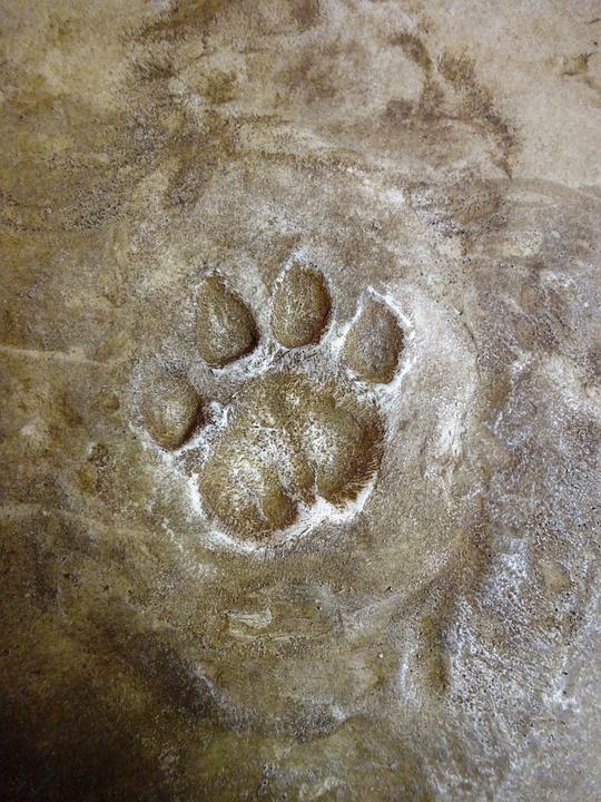 Tracks, Footprint, Wild Feet, Animal Foot, Felids, Fox