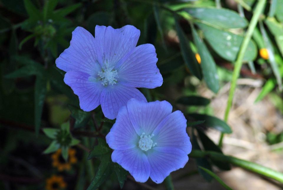 Wild, Flora, Plants