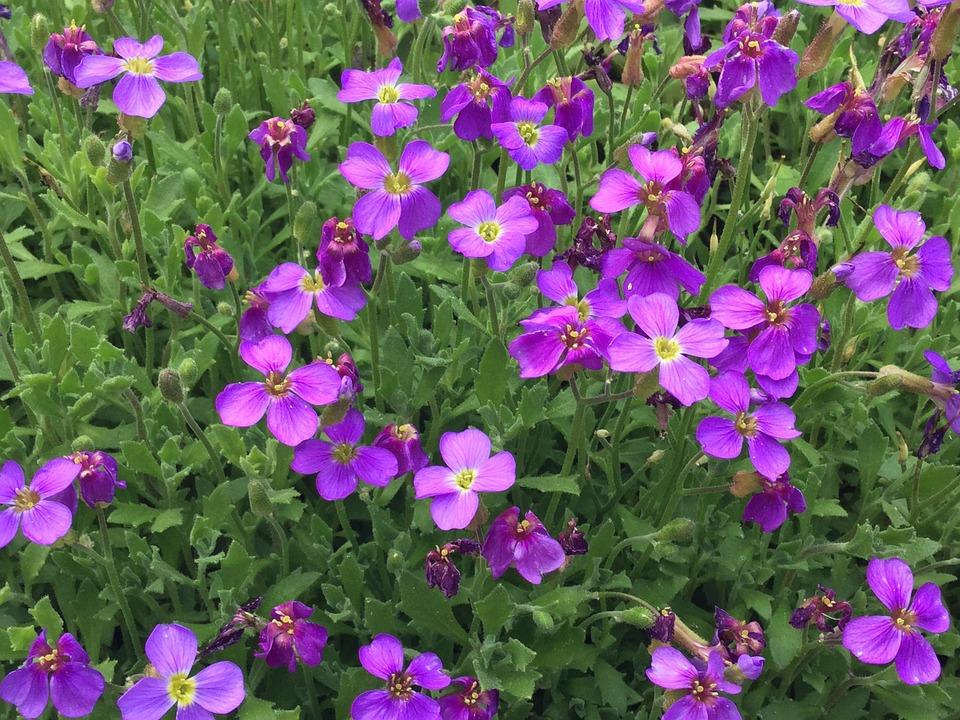 Flower, Purple Flower, Purple Flowers, Wild Flower