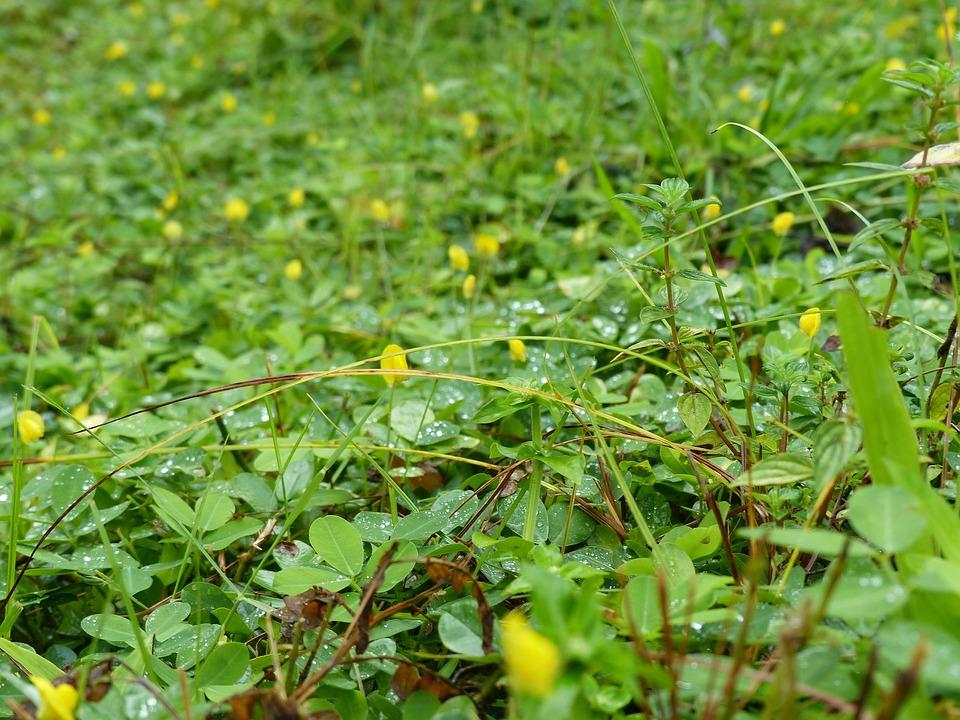 Grass, Wild Flower, Green