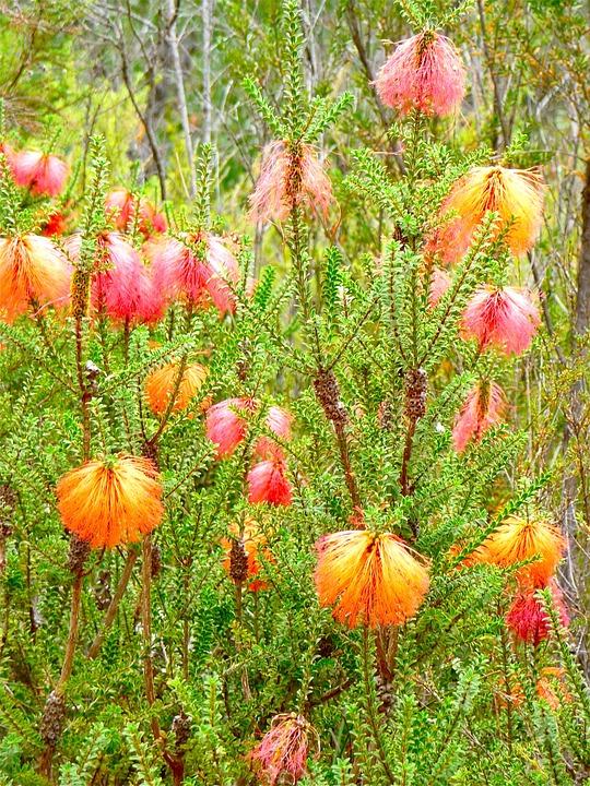 Wild, Flower, Flora, Beautiful, Wild Flower, Wildflower
