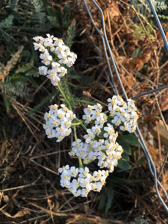 Wild Flowers, Autumn, Fence, Nature, Blütenzauber