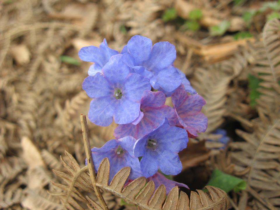 Flower, Wild, Forest, Nature, Wild Flowers, Color