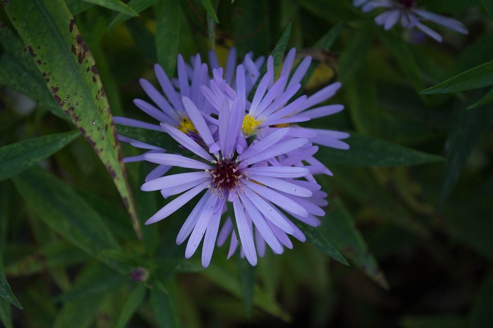 Flower, Purple, Purple Flower, Flowers, Spring, Wild