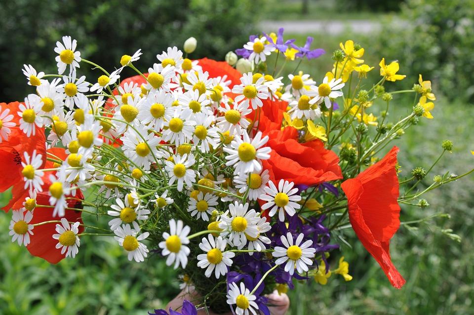 Free photo Wild Flowers Red Poppy Flower Bouquet - Max Pixel