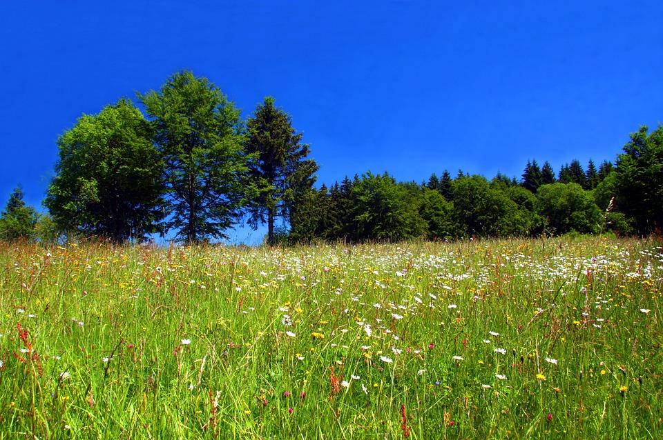 Spring Meadow, Flower Meadow, Wild Flowers, Spring