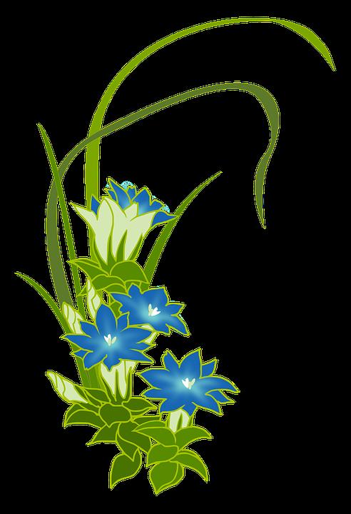 Gentian, Wild Grass, Blue, Flowers, Fuderindou
