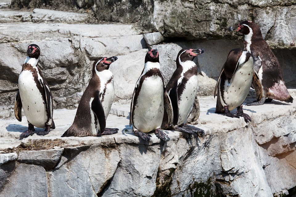 Animal, Animals, Bird, Birds, Group, Standing, Wild