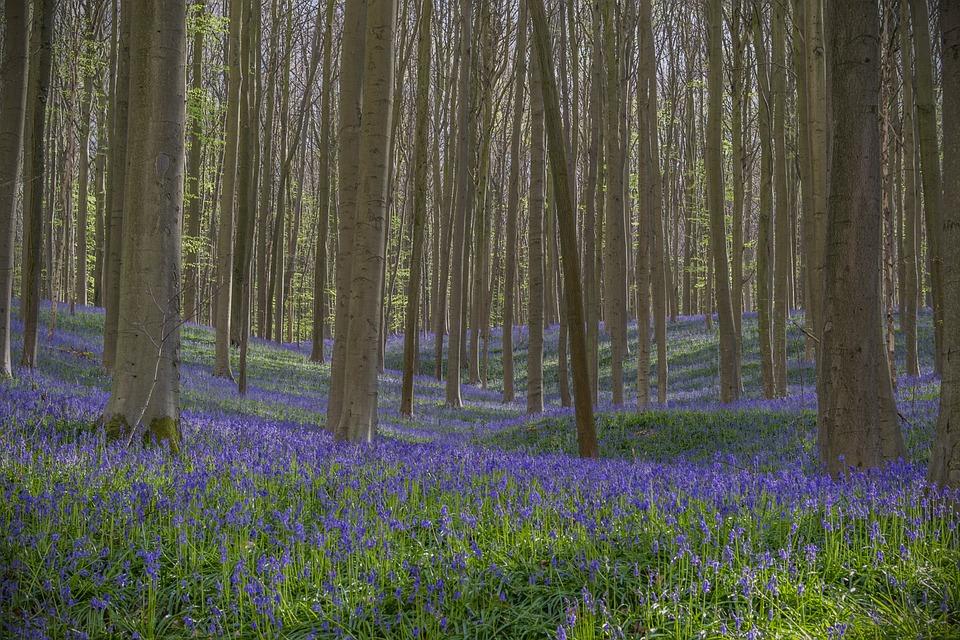 Flowers, Wild Flower, Forest, Spring, Wild Hyacinth