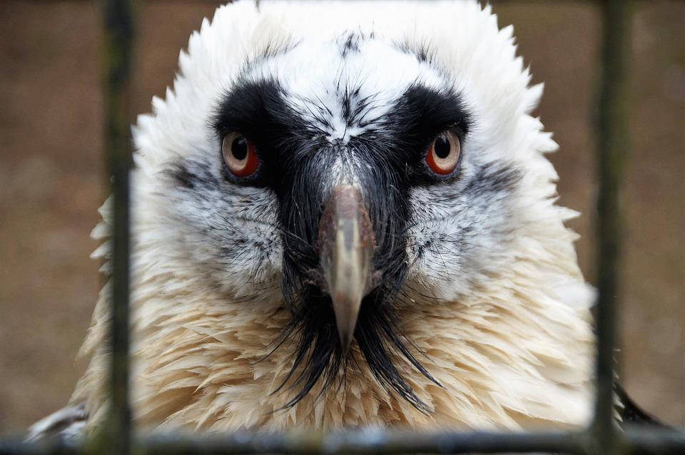 Bird, Large, Predator, Eagle, Feather, Wild, Head, Beak