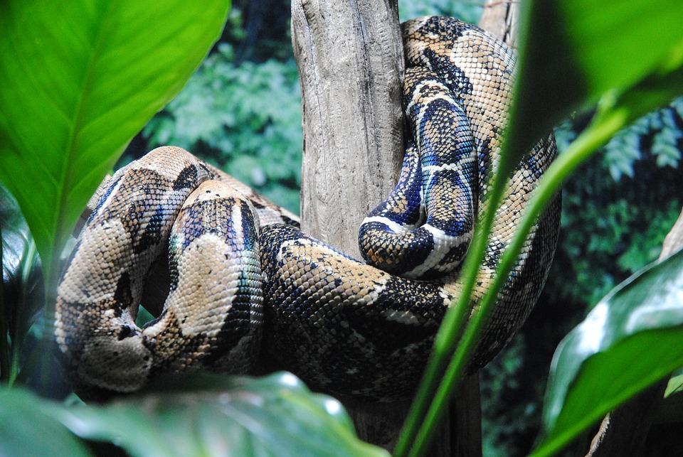Nature, Snake, Reptilia, Wild Life, Animalia, Zoology
