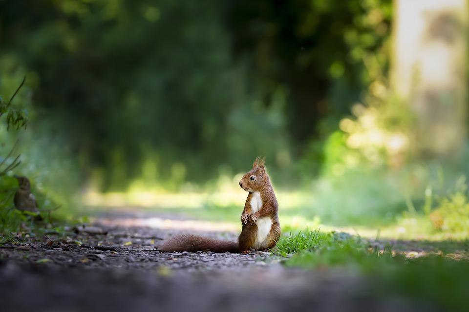 Squirrel, Nature, Cute, Wild, Mammals