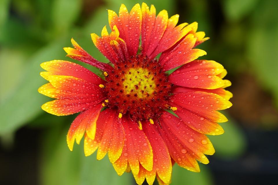 Wildflower, Wild, Flower, Mountain, Nature, Beautiful