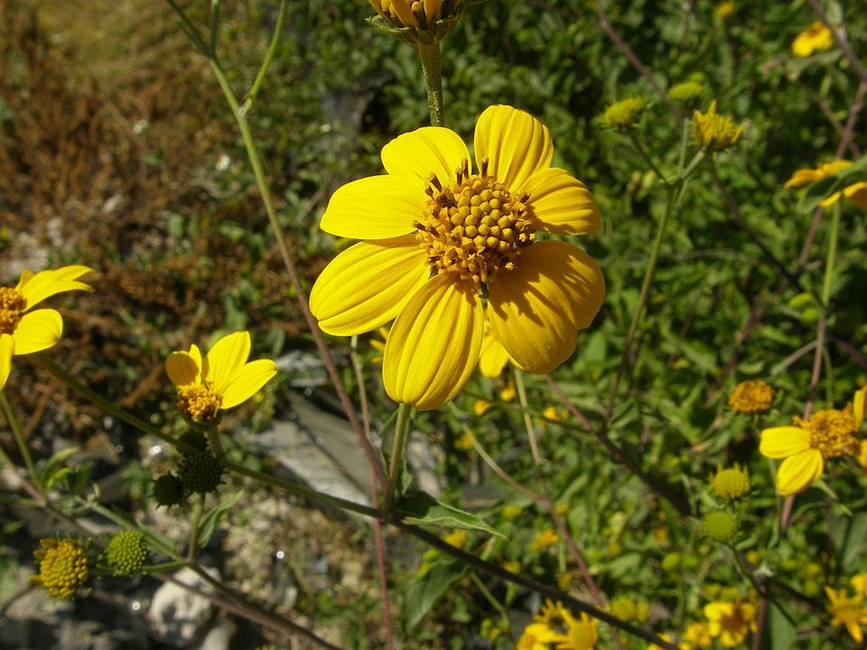 Flower, Yellow, Flowers, Nature, Wild